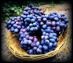 grape seed extract testosterone supplement