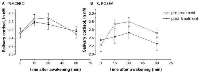 cortisol response when taken rhodiola rosea