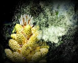 pine pollen natural androgen